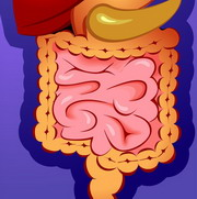 Photo: Image of human gut
