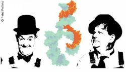 Image: Graphic of the micorna connection between pictures of Laurel and Hardy; Copyright: Petra Pollins