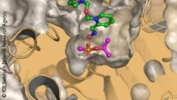 Graphic: model of protein