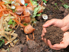 Photo: Hands with compost
