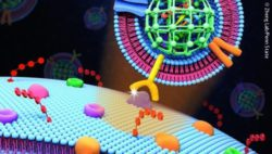 Image: illustration of drug encapsulation; Copyright: Zheng Lab/Penn State