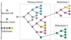 Image: Phylogenetic tree for cancer evolution; Copyright: Perelman School of Medicine, University of Pennsylvania
