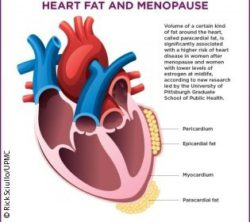 Image: Graphic of a heart and a text about the risk of heart disease in postmenopausal women  ; Copyright: Rick Sciullo/UPMC