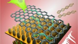 Image: biosensor platform consisting of graphene layers; Copyright: Letao Yang, KiBum Lee, Jin-Ho Lee and Sy-Tsong (Dean) Chueng