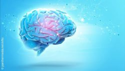 Similar Changes In Brains Of Patients >> Changes In The Brains With Adhd And Emotional Instability Medica