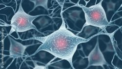Photo: Amplified neurons