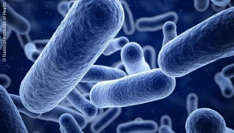 Image: Closeup of bacterial cells; Credit: National Institutes of Health