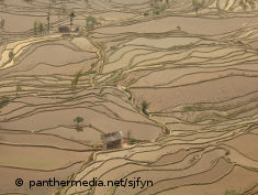 Photo: Ricefields filled with muddy water