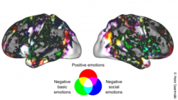 Image: an emotional state mainly activates wide, overlapping neural networks; Copyright: Heini Saarimäki