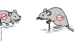 Image: illustration of two mice, one with a walking stick; Copyright: Kerstin Wagner / FLI