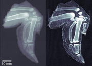 Photo: Conventional X-ray and dark field