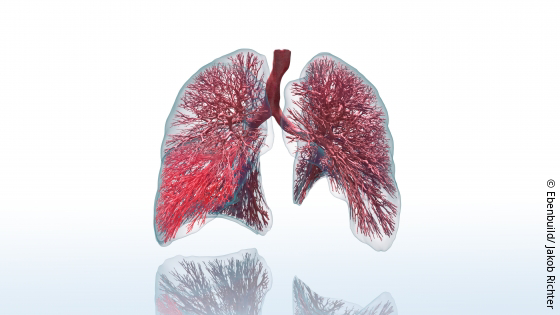 Image: Digital twin of a lung; Copyright: Ebenbuild/Jakob Richter