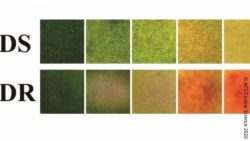 Image: color scale for the new bandage; Copyright: ACS Central Science 2020, DOI: 10.1021/acscentsci.9b01104