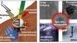 Image: Collage of images showing how a new surgical adhesive works; Copyright: IBS