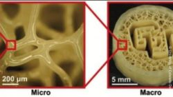 Image: 3D-printed tissue; Copyright: University of Colorado Denver