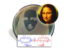 Photo: Mona Lisa mask for antibiotic test