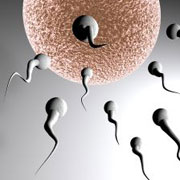 Photo: Fertilisation