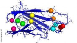 Image: colorful figure showing an important part of the protein with contact pairs; Copyright: Ines Reinartz, KIT