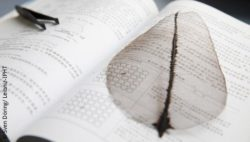 Image: leaf electrode lying on a book next to tweezers; Copyright: Sven Döring/ Leibniz-IPHT