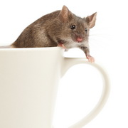 Photo: Mouse in cup