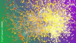 Image: A network map of coloured dots; Copyright: Jeff Leinert, NHGRI