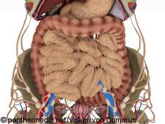 Graphic: model of an intestine
