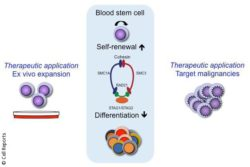 Grafic: Human blood stem cell