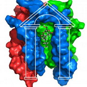 photo: representation of diacylglycerol kinase