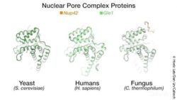 Image: proteins in the nuclear pore complex; Copyright: California Institute of Technology