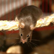 Picture: A mouse on a rope