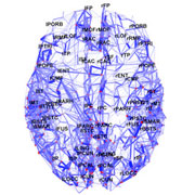 Photo: High-resolution map of the human cerebral cortex