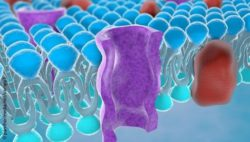 Image: Structure of the plasma membrane of a cell; Copyright: panthermedia.net/vampy1