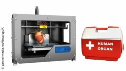 "Image: 3D printer with a human heart inside, next to a box with ""Human Organ"" written on it; Copyright: panthermedia.net/NosorogUA"