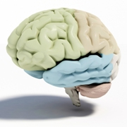 Photo: Portrayal of human brain